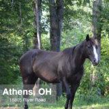 Athens_Ohio_45701_18805_River_1_House