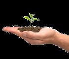 Hand with Seeding